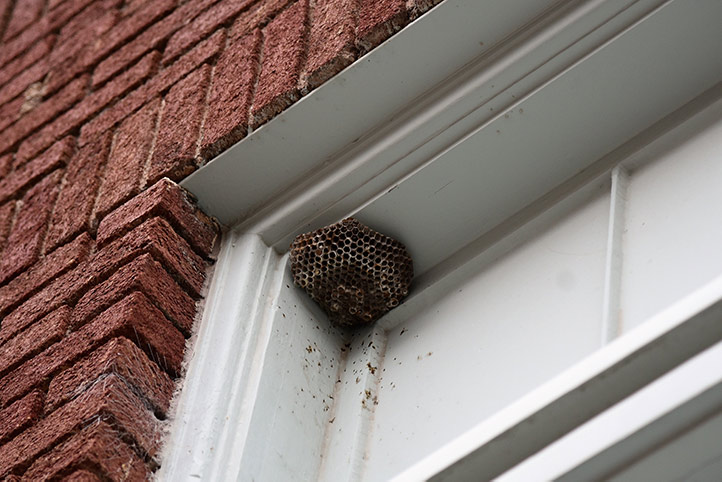 We provide a wasp nest removal service for domestic and commercial properties in Archway.